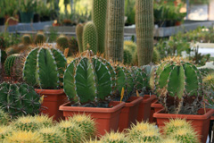 cactusgarden.it